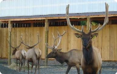 Elk Farm